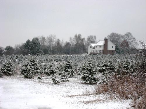 07 Christmas Trees.JPG
