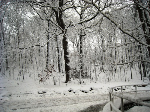 2007 Winter Snow.JPG