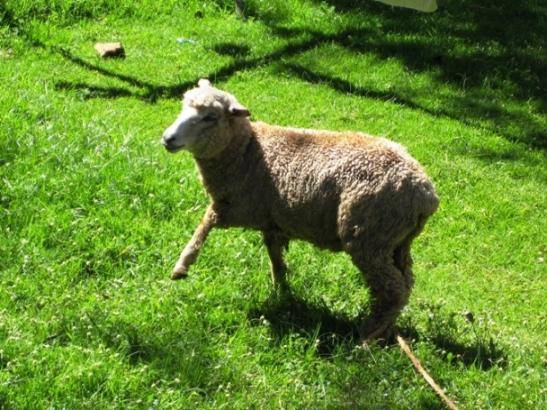 Lamb Feast - Before.JPG