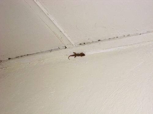 My Salamander Friend.JPG